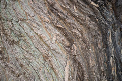 Texture Wood Bark. Close up of wood bark, showing wood texture Stock Photo