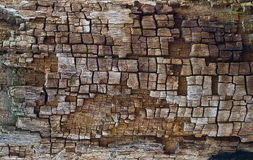 The   texture of wood burned by lightning. Stock Images