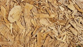 Texture of wood chips Stock Images