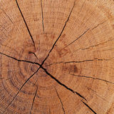 The texture of wood cut across Royalty Free Stock Images
