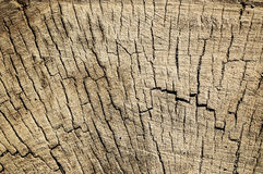 The texture of the wood in the cut. The texture of the old wood in the cut Royalty Free Stock Photos