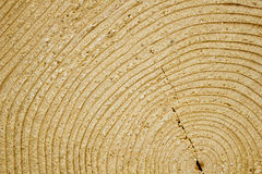 Texture of wood cut to the year rings. Stock Photos