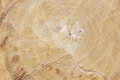 Texture of wood. Of a felling background Stock Image