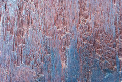Texture of wood fossil Royalty Free Stock Photos