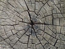 Texture wood royalty free stock images