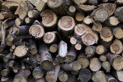 Texture wood logs Stock Images