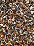 Texture of wood bark. Texture of wood mulch made out of bark nuggets for landscaping use, drought resistant Royalty Free Stock Photos