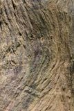 Texture wood Natural wood surface, ideal for backgrounds and textures Stock Photo