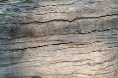 Texture wood004. Texture old wood from tree Royalty Free Stock Photography