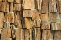 Texture of the wood is photographed Stock Photo