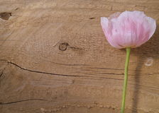 Texture Wood and Pink Flower Background. Feminine Pink Flower on rustic wood background texture. Stem is green and wood is brown Royalty Free Stock Images