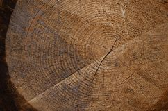 Texture of a wood stump in the forest with a crack in the middle. Texture of a brown wooden stump in the forest with a crack in the middle royalty free stock image