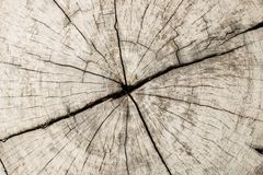 Wooden stump,Round cut down tree with annual rings. Texture of wood stump,Round cut down tree with annual rings as a wood texture with a crack Royalty Free Stock Photo