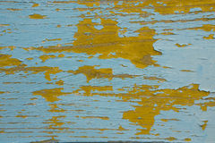 The texture of the wood tree with weathered painting. The texture of the yellow wood tree with blue weathered painting Stock Photo