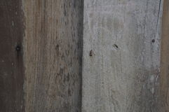 Texture wood wooden detail background floor ground concept Royalty Free Stock Image