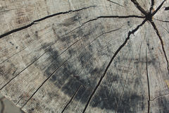 Texture of wooden cracked background. Texture hardwood cut of tree concept circle cracked vintage wall Royalty Free Stock Photos