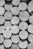 Texture of wooden logs for designs, pattern for backgrounds. Black and white vertical close-up royalty free stock image