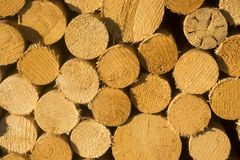 Texture of wooden logs for designs, pattern for backgrounds. Horizontal close-up royalty free stock image