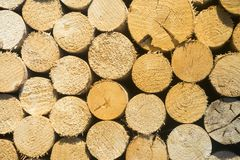 Texture of wooden logs for designs, pattern for backgrounds. Close-up with big amount of logs royalty free stock photography