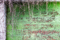 Texture of wooden plank wall painted green and cracked with time. Royalty Free Stock Photography