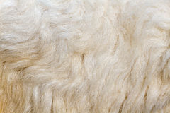 Texture of wool Stock Images