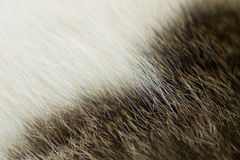 Texture on wool Royalty Free Stock Image