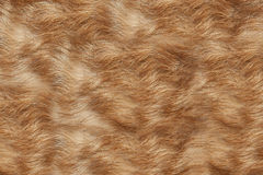 Texture wool red dog Stock Photo