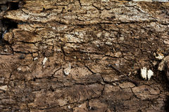 Texture of the wrong side of the old tree bark. Brown wooden background. Royalty Free Stock Photos