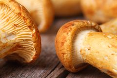 Texture yellow chanterelle mushrooms Royalty Free Stock Photos