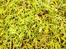 Texture of yellow grass plants. Photography Royalty Free Stock Images