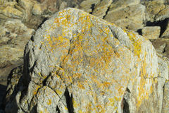 Texture of yellow moss on the stone Stock Photo