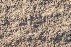 Texture yellow plastered cliff texture for background. Royalty Free Stock Photo