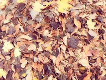 Texture of yellow and red, brown colorful natural fallen autumn different leaves. The background stock photo