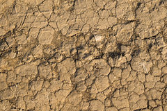 Texture of yellow withered earth Royalty Free Stock Photos