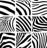 Texture of the zebra Stock Photography