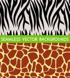 Texture of zebra giraffe Royalty Free Stock Photos