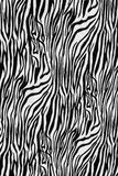 Texture of zebra style fabric Royalty Free Stock Image