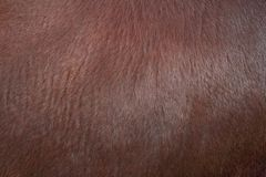 Texture of zebu fur Royalty Free Stock Photos