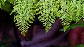 Texture zieleni paproć zdjęcia stock