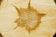 texture02 drewna Obraz Royalty Free