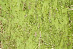 Textured abstract background in green color Stock Images
