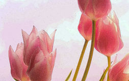 Textured abstract tulip spring background. Digitally enhanced photograph of some beautiful spring tulips against a bright blue sky Royalty Free Stock Photography