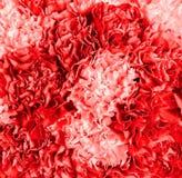 Textured abstrakcjonistyczny tło od bukieta kwiatu zbliżenie Zdjęcie Royalty Free
