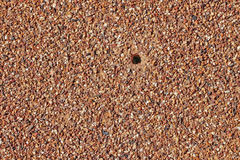 Textured ant hill background Stock Photos