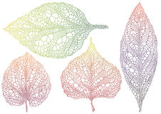 Textured autmn leaf royalty free illustration