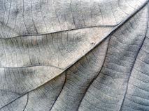 Textured autumn brown leaf Royalty Free Stock Photography