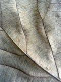Textured autumn brown leaf Royalty Free Stock Photo