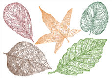 Textured autumn leaves royalty free illustration