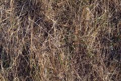 Textured background from the background of dry grass and soil. Autunm Royalty Free Stock Images