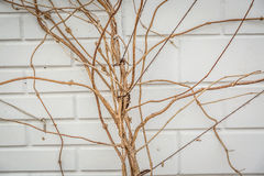 Textured Background of Branches Against an Wall Stock Images